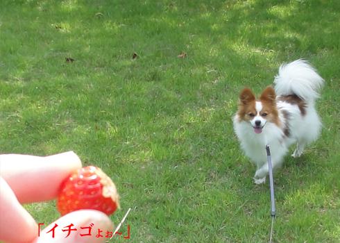 「イチゴよ~」