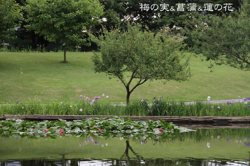 池の向こう側の風景ショット クリックすると拡大します