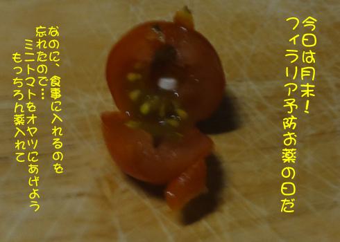 ミニトマトに薬を入れて