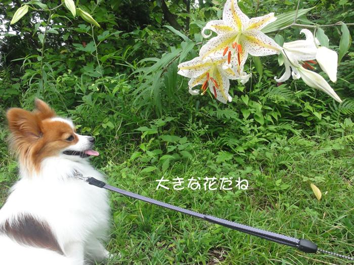 見事な花でしょ 拡大するよ♪