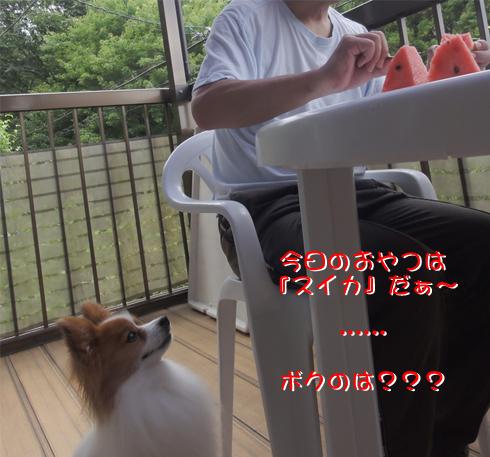 スイカ食べたいなぁ~
