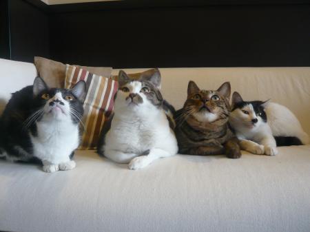 オラとモアニとラーとレア