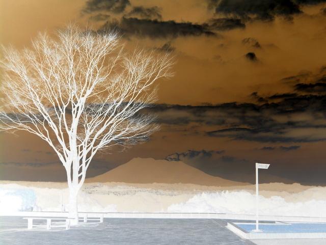 裸木と桜島