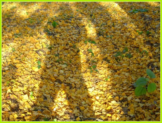 落葉の人影