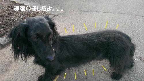 繝ェ繝・け縺ョ繝輔こ_convert_20140111215815