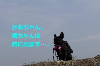 IMGP3239.jpg