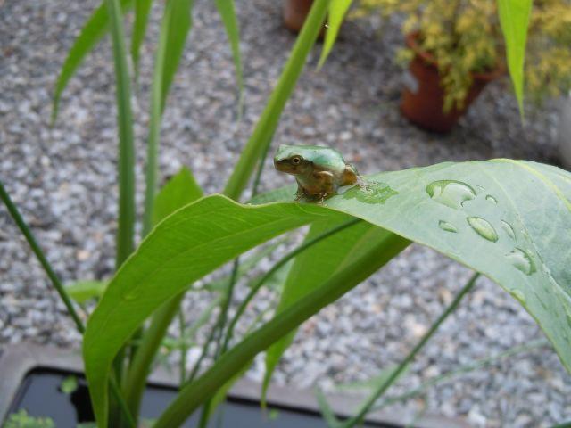 Frog_5029_1.jpg