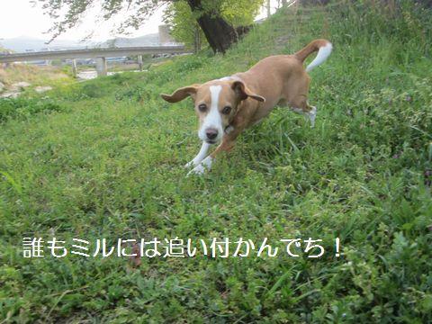 006_20130417122137.jpg