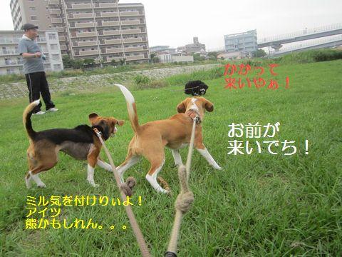 107_20130531144252.jpg