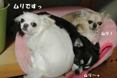 002_convert_20130925103211.jpg