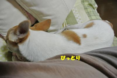 20130712+024_convert_20130712105020.jpg