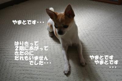 20130719+011_convert_20130719103847.jpg