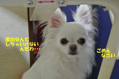 20130728+004_convert_20130728160429.jpg