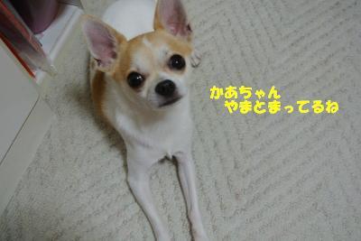 20130801+008_convert_20130801094235.jpg