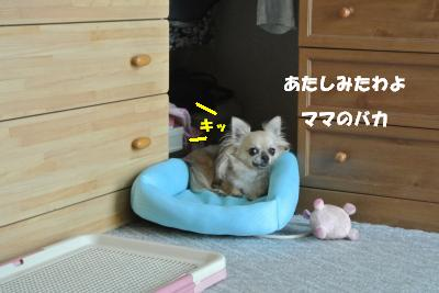 20130805+015_convert_20130805102456_201308051137560cc.jpg