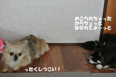 20130819+015_convert_20130819095217.jpg