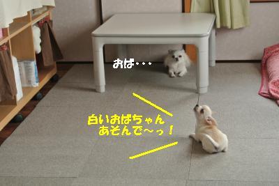 20131014+033_convert_20131014132643.jpg