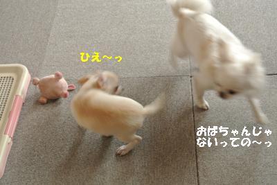 20131014+037_convert_20131014132713.jpg