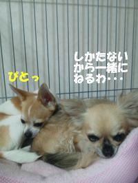 DSC_0700_convert_20130711111841.jpg