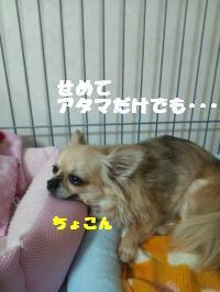 DSC_0709_convert_20130712105352.jpg