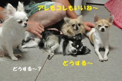 DSC_8554_convert_20130913141828.jpg