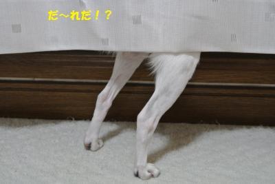 DSC_8649_convert_20130918100218.jpg
