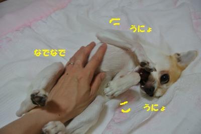 DSC_8656_convert_20130918100342.jpg