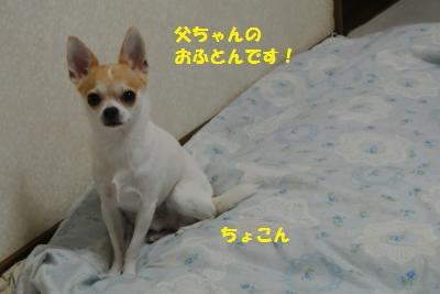 DSC_8664_convert_20130918100426.jpg