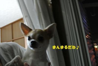 DSC_8711_convert_20130920093657.jpg