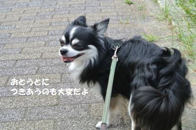 DSC_8783_convert_20130924112204.jpg