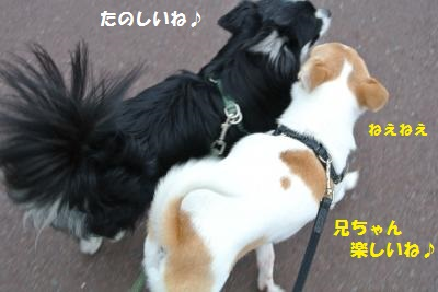 DSC_8795_convert_20130924112354.jpg
