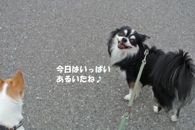 DSC_8799_convert_20130924112411.jpg