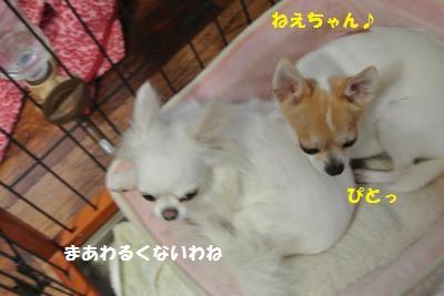 DSC_8867_convert_20130926104708.jpg