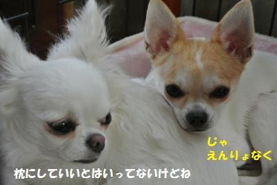 DSC_8870_convert_20130926104749.jpg