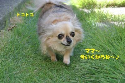DSC_8957_convert_20130930103437.jpg