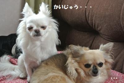 DSC_8966_convert_20130930103625.jpg
