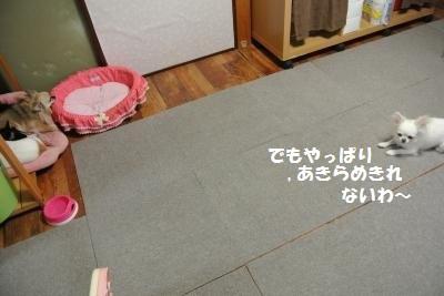 DSC_8987_convert_20131001112148.jpg