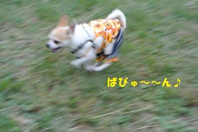 DSC_9016_convert_20131007105606.jpg