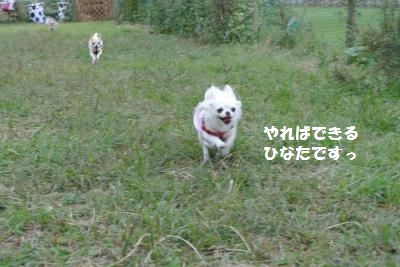 DSC_9017_convert_20131007105622.jpg