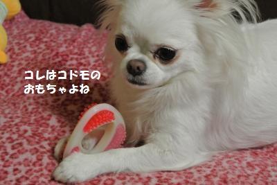 DSC_9624_convert_20131021095757.jpg