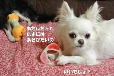 DSC_9635_convert_20131021095938.jpg