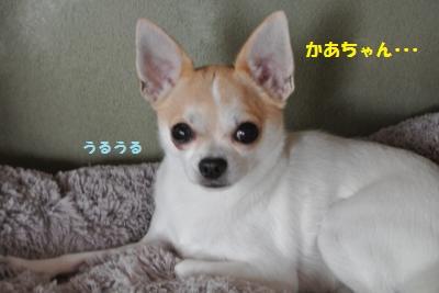 DSC_9709_convert_20131023095335.jpg