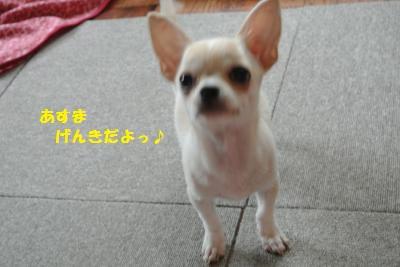 DSC_9721_convert_20131023095428.jpg
