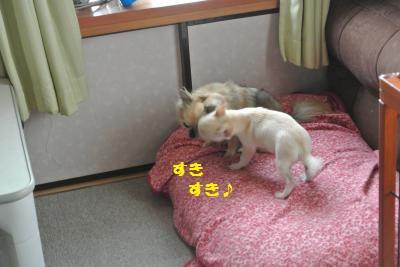 DSC_9729_convert_20131023095505.jpg
