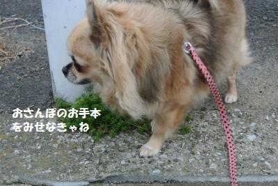 DSC_9744_convert_20131024110149.jpg