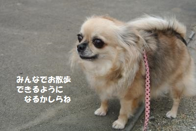 DSC_9763_convert_20131024110308.jpg