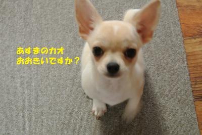 DSC_9766_convert_20131024110421.jpg