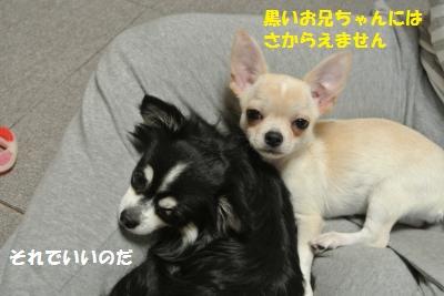 DSC_9788_convert_20131025103602.jpg
