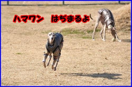 DSC_0001_20140114221844adb.jpg