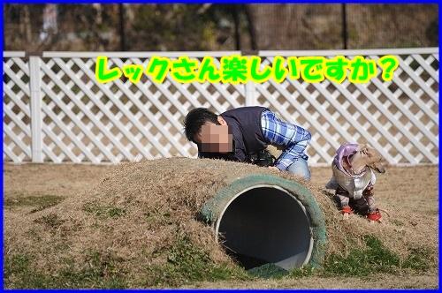 DSC_2481_201401142219271f1.jpg
